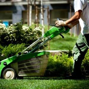Limpeza Do Jardim