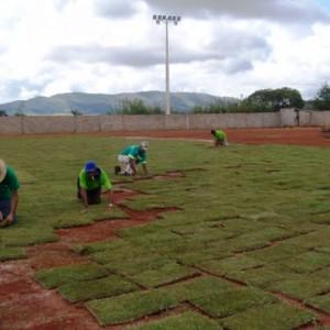Plantio Em Campos De Futebol