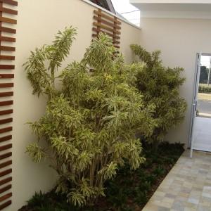 Jardim De Corredor