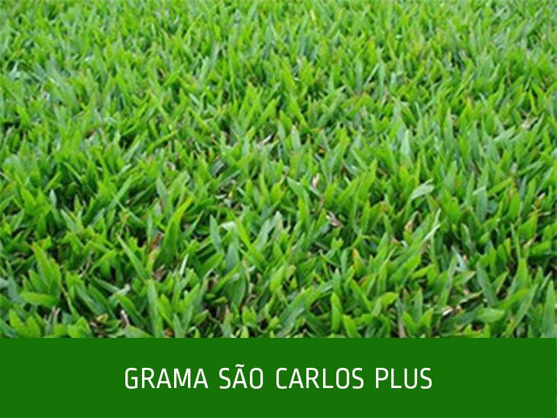 _GRAMA-SÃO-CARLOS-PLUS